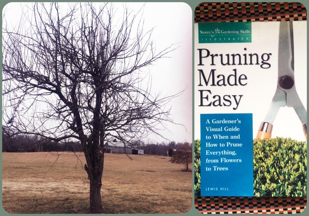 tree prune